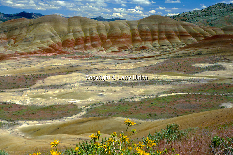 Cusick's sunflower<br />