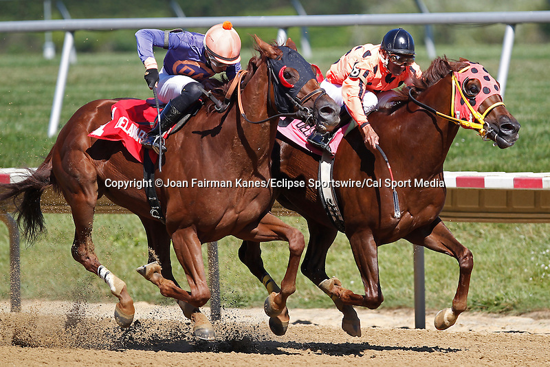 July 5, 2014: I'm Steppin' It Up (#8, right), Jose Caraballo up, wins the Carl Hanford Memorial Stakes, one mile and 70 yards on the dirt for 3-year-olds and up, at Delaware Park in Stanton, DE. Trainer is Anthony Pecoraro; owner is Roman Hill Farm. Balance of Power (left), with Alex Cintron, was second. ©Joan Fairman Kanes/ESW/CSM