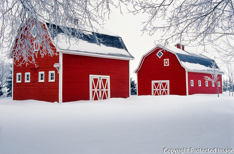 Two red barns and hoarfrost<br />near Oakbank<br />Manitoba<br />Canada