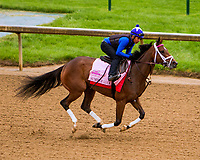 LOUISVILLE,KNY - MAY 04:  Summer Luck Morning works  at Churchill Downs, Louisville, Kentucky. (Photo by Sue Kawczynski/Eclipse Sportswire/Getty Images)
