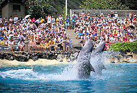 Sea life Park tourist attraction with dolphins, Oahu