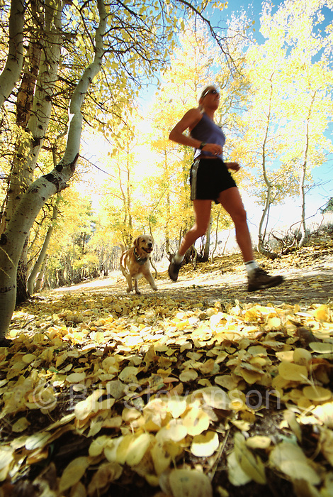 A picture of a woman running with her dog in fall aspens near Truckee, CA.
