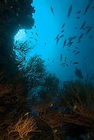 Maldives baa atoll darajandhoo school of various fishes on a drop off