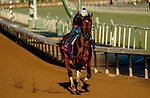October 28, 2019 : Breeders' Cup Sprint entrant Engage, trained by Steven M. Asmussen, exercises in preparation for the Breeders' Cup World Championships at Santa Anita Park in Arcadia, California on October 28, 2019. John Voorhees/Eclipse Sportswire/Breeders' Cup/CSM