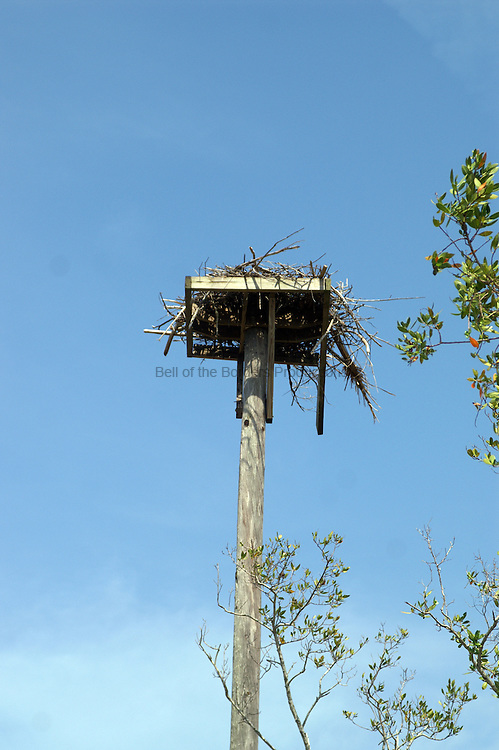 An old nest is visible on this osprey nesting platform.