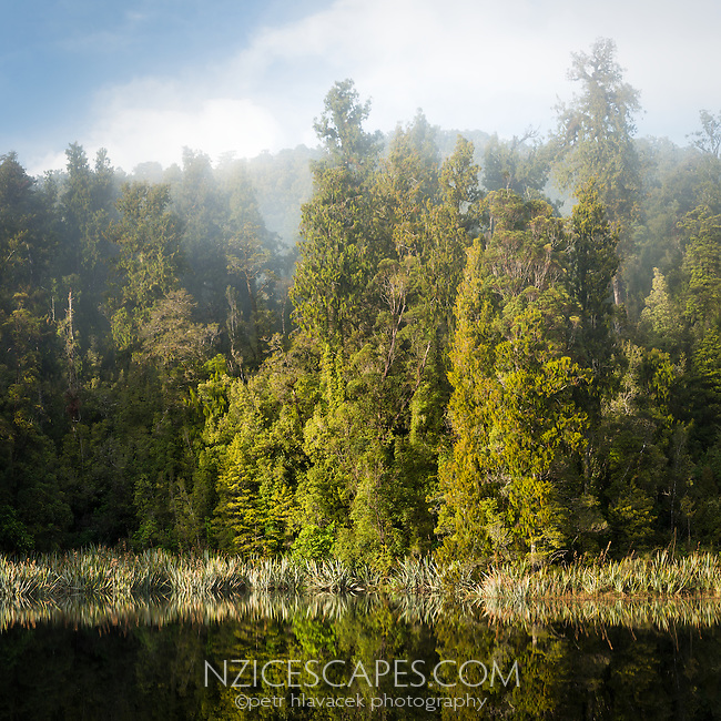 Morning fog in native forest at Lake Matheson, Westland Tai Poutini National Park, UNESCO World Heritage Area, West Coast, New Zealand, NZ