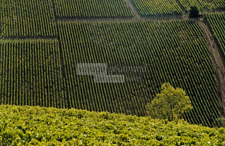 Europe/France/89/Yonne/AOC Chablis: Le vignoble à Chablis au petit matin depuis le clos