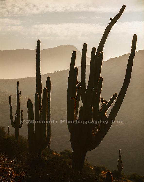 Dutch Woman Butte,Salome Wilderness,Arizona