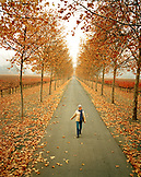 USA, California, Rutherford, trees with Autumn colors and a young woman walking on road, Napa Valley vineyard
