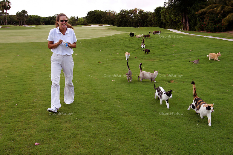 Susan Hershey walks with her stray cats on the golf course. When the decision is made to fight an invasive species, the methods can be ruthless: widespread slayings, mass poisonings, relentless uprootings. But the only thing these feral cats are in danger of is being killed by kindness. In the private Ocean Reef community on Key Largo, Florida, three volunteers care for the area's feral cats, making sure the animals are spayed or neutered as well as fed. In ten years this program has cut the population from a high of some 2,000 cats down to about 500.