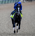 LOUISVILLE, KENTUCKY - APRIL 28: Long Range Toddy, trained by Steven Asmussen, exercises in preparation for the Kentucky Derby at Churchill Downs in Louisville, Kentucky on April 28, 2019. John Voorhees/Eclipse Sportswire/CSM