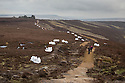 Moorland restoration works being carried out in parnership between Moors for the Future and Natural England to restore the eroded footpath along Derwent Edge in the Peak District National Park, UK. Eroded moorland surrounding the path is being re-vegetated using heather brash, seen here in white helecopter bags. March 2015.