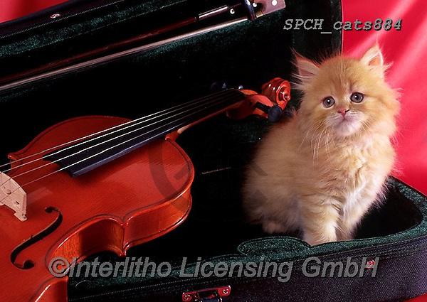 Xavier, ANIMALS, REALISTISCHE TIERE, ANIMALES REALISTICOS, cats, photos+++++,SPCHCATS884,#a#, EVERYDAY