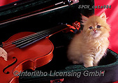 Xavier, ANIMALS, REALISTISCHE TIERE, ANIMALES REALISTICOS, cats, photos+++++,SPCHCATS884,#a#, EVERYDAY