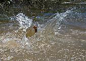 Xingu Indigenous Park, Mato Grosso State, Brazil. A child swimming in the river, Aldeia Yawalapiti.