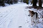 Ballydicken in the snow
