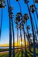 Palm trees, Cabrillo Boulevard, Santa Barbara, California USA.