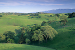 Green hills in spring along Foxen Canyon Road, Santa Barbara County, California