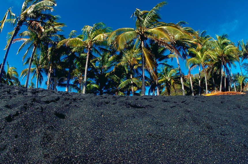 Black sand beach with coconut palm trees. Punaluu, Hawaii.