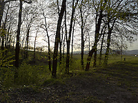 FOREST_LOCATION_90218