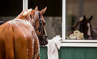 ELMONT, NY - JUNE 07: Justify gets a bath after completing preparations for the 150th Belmont Stakes at Belmont Park on June 07, 2018 in Elmont, New York. (Photo by Alex Evers/Eclipse Sportswire/Getty Images)