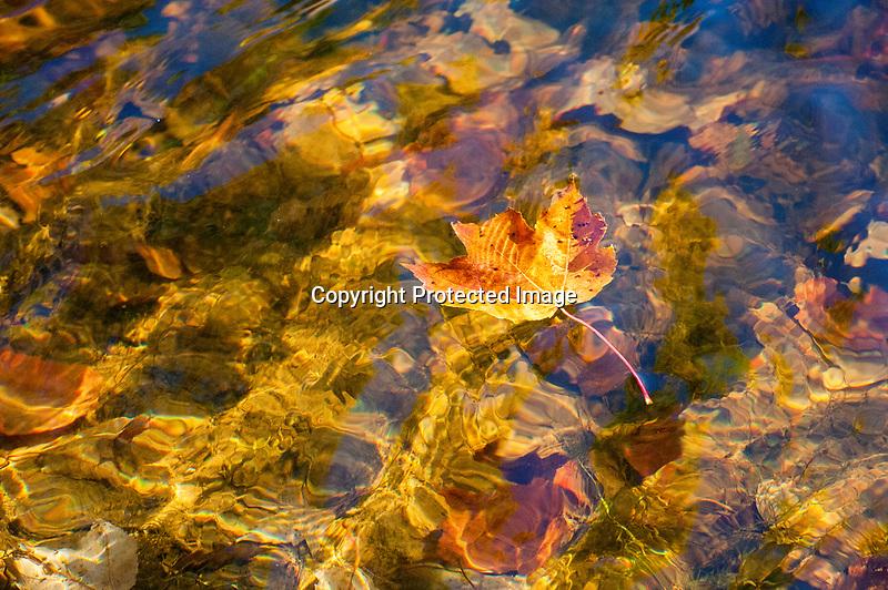 Fall Leaf in River
