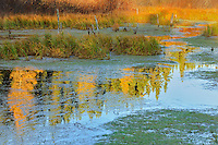 Morning light on a wetland<br /> Ear Falls<br /> Ontario<br /> Canada