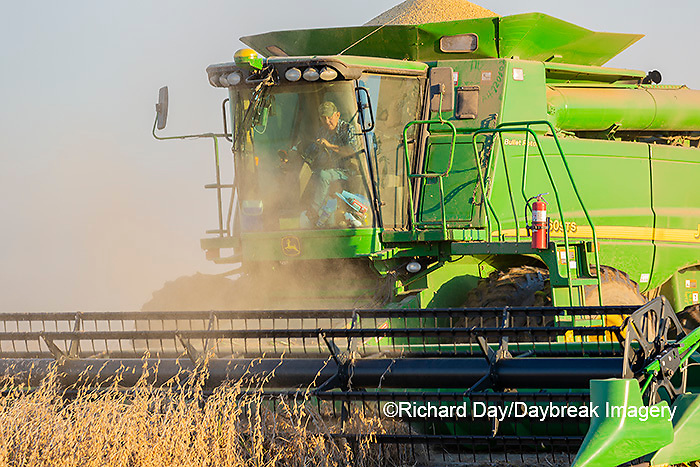 63801-13120 Harvesting soybeans in fall  Marion Co. IL