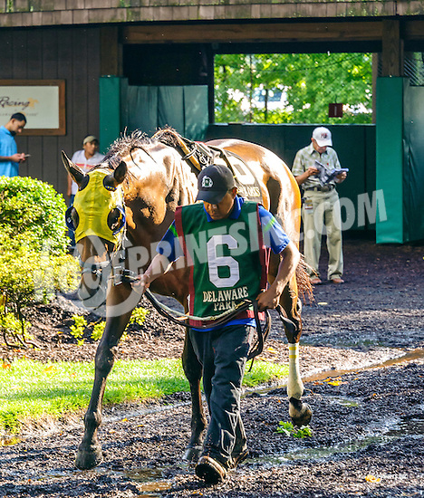 Downdraft before The Delaware Oaks (gr 3) at Delaware Park on 7/9/16