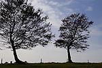 Europa, DEU, Deutschland, Baden Wuerttemberg, Schwarzwald, Schauinsland, Naturpark Suedschwarzwald, Hofsgrund, Baeume, Herbst, Buchen, Windbuchen, Himmel, Wolken, Kategorien und Themen, Natur, Umwelt, Landschaft, Jahreszeiten, Stimmungen, Landschaftsfotografie, Landschaften, Landschaftsphoto, Landschaftsphotographie, Wetter, Himmel, Wolken, Wolkenkunde, Wetterbeobachtung, Wetterelemente, Wetterlage, Wetterkunde, Witterung, Witterungsbedingungen, Wettererscheinungen, Meteorologie, Bauernregeln, Wettervorhersage, Wolkenfotografie, Wetterphaenomene, Wolkenklassifikation, Wolkenbilder, Wolkenfoto....[Fuer die Nutzung gelten die jeweils gueltigen Allgemeinen Liefer-und Geschaeftsbedingungen. Nutzung nur gegen Verwendungsmeldung und Nachweis. Download der AGB unter http://www.image-box.com oder werden auf Anfrage zugesendet. Freigabe ist vorher erforderlich. Jede Nutzung des Fotos ist honorarpflichtig gemaess derzeit gueltiger MFM Liste - Kontakt, Uwe Schmid-Fotografie, Duisburg, Tel. (+49).2065.677997, ..archiv@image-box.com, www.image-box.com]
