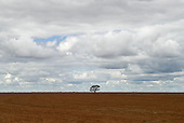 Goias State, Brazil. Ploughed agricultural land with a solitary tree.