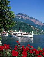 Schweiz, Kanton Luzern, Weggis: Dampfschiff URI verlaesst die Schiffsanlegestelle | Switzerland, Canton Lucerne, Weggis: steam boat URI