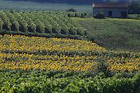 Europe/France/Aquitaine/47/Lot-et-Garonne : Vignoble Côtes de Buzet