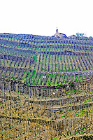 The chapel on top of the hill the Chapelle vineyard, in the foreground Les Bessards. The Hermitage vineyards on the hill behind the city Tain-l'Hermitage, on the steep sloping hill, stone terraced. Sometimes spelled Ermitage. Tain l'Hermitage, Drome, Drôme, France, Europe