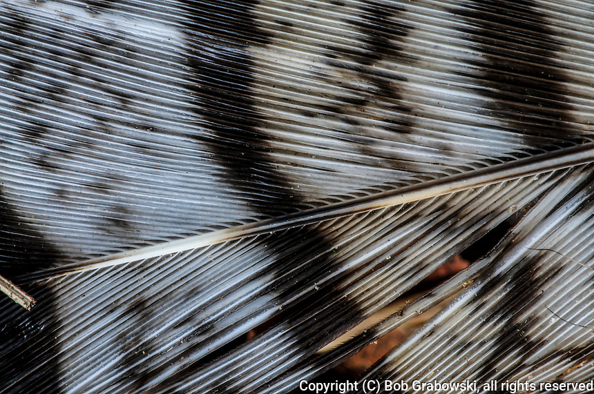 Detail Of A Bird Feathers In The Adirondack Mountains Of New York State