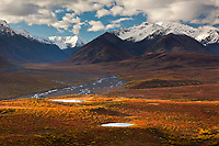 Morning sunshine falls across the Polychrome mountains highlighting the brightly colored autumn tundra, cumulous clouds form overhead, Denali National Park