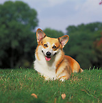 Pembroke Welsh Corgi Shopping cart has 3 Tabs:<br />