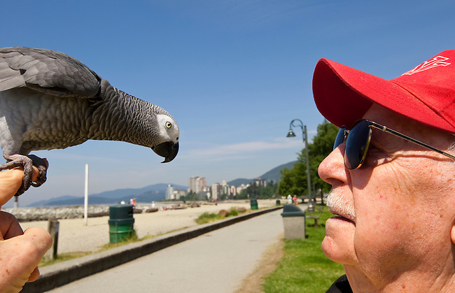 "Kenneth Richardson, AKA ""The Bird Man"" and Babe, his 20-year-old Congo African Gray Parrot enjoy the beautiful spring weather at Ambleside Park in West Vancouver on Monday, June 1, 2009."