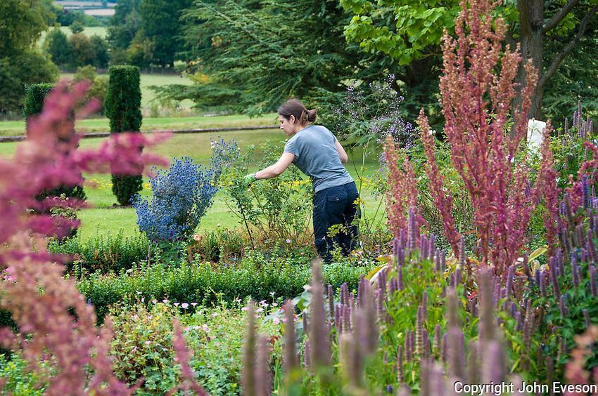 Female gardener pruning, Middle Claydon, near Buckingham, Buckinghamshire
