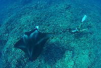 A diver gets close to a manta in order to take a picture at Ukumehame reef Maui Hawaii.