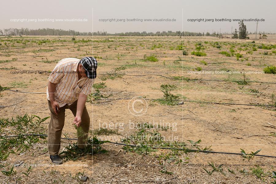 EGYPT, Ismallia , Sarapium forest in the desert, the trees are irrigated by treated sewage water from Ismalia, new plantation with drip irrigation / AEGYPTEN, Ismailia, Sarapium Forstprojekt in der Wueste, die Baeume werden mit geklaertem Abwasser der Stadt Ismalia bewaessert, kahl geforstete Flaeche, Neupflanzung mit Troepfchenbewaesserung, Hossam Hammad, Professor der Landwirtschaftlichen Fakultät der Ain Shams University in Kairo