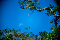 Moon and trees, , Holly Hill, FL, May 2019, Rokinon 300mm f6.3 mirror lens on a Canon EOS 1DX digital body. (Photo by Brian Cleary/ www.bcpix.com )
