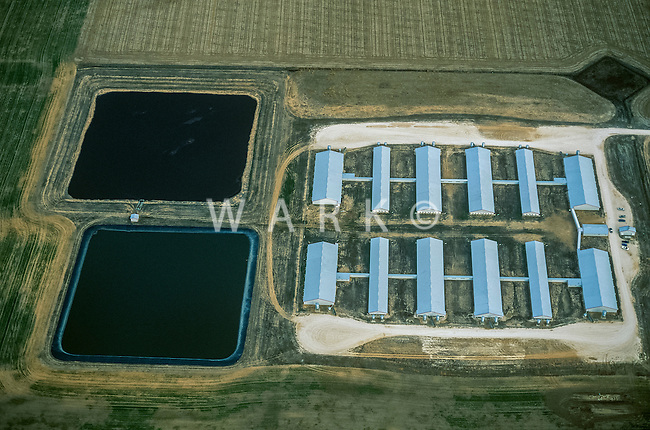 Hog Farm, Perrytown, Texas. 2002