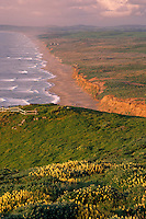 Yellow tree lupine on Pt. Reyes<br />