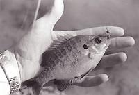 Fishing at Burba Lake, Md.