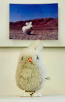 """CROATIA, 2011/01/31.""""The bunny was supposed to travel the world but never got farther than Iran. This is not photoshopping, but a real photo of the bunny in a desert near Tehran.""""  .Zagreb, Croatia.© Petar Kurschner / Est&Ost Photography.CROATIE, Zagreb, 31/01/2011.""""Le lapin était censé voyager à travers le monde entier mais il n'est jamais allé plus loin que l'Iran. Ceci n'est pas un photo-montage, mais une véritable photo du lapin dans le désert près de Téhéran."""" Zagreb, Croatie..© Petar Kurschner / Est&Ost Photography"""