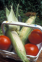 Corn Silver Queen sweet white corn with bicolor corn in basket with tomatoes