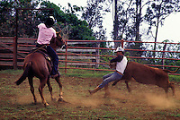 Paniolos (Hawaiian cowboys) in action, Parker Ranch, Waimea (Kamuela)