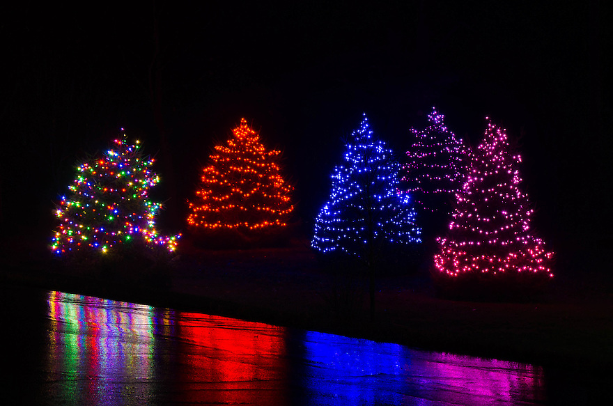 Lit christmas trees with reflection picture new hampshire