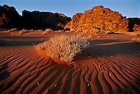 The sweeping dunes of Wadi Rum.